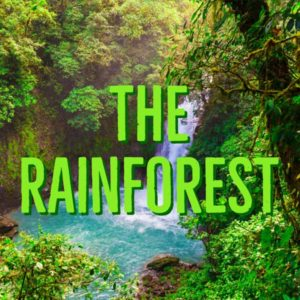 The Rainforest