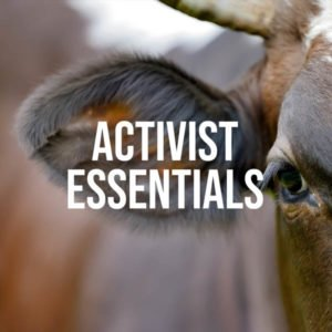 Activist Essentials Lacquer Collection