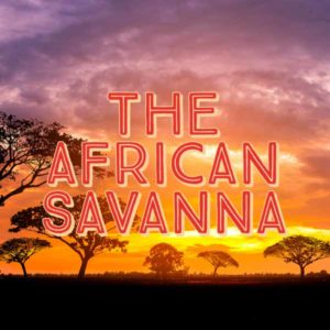 The African Savanna